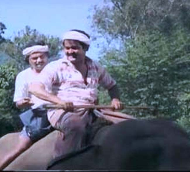 Image result for mohanlal elephant